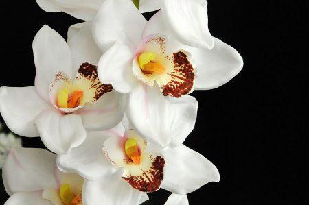 Fattoria didattica ferrando il giardino dell orchidea for Costo orchidea
