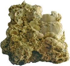 fossili-e-pietre-del-finale